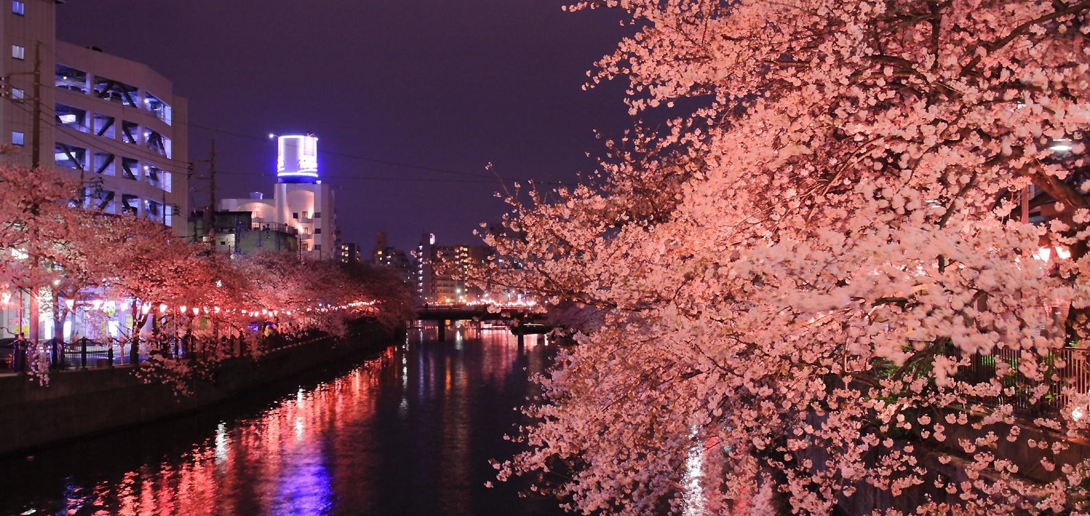 夜桜が美しい川辺
