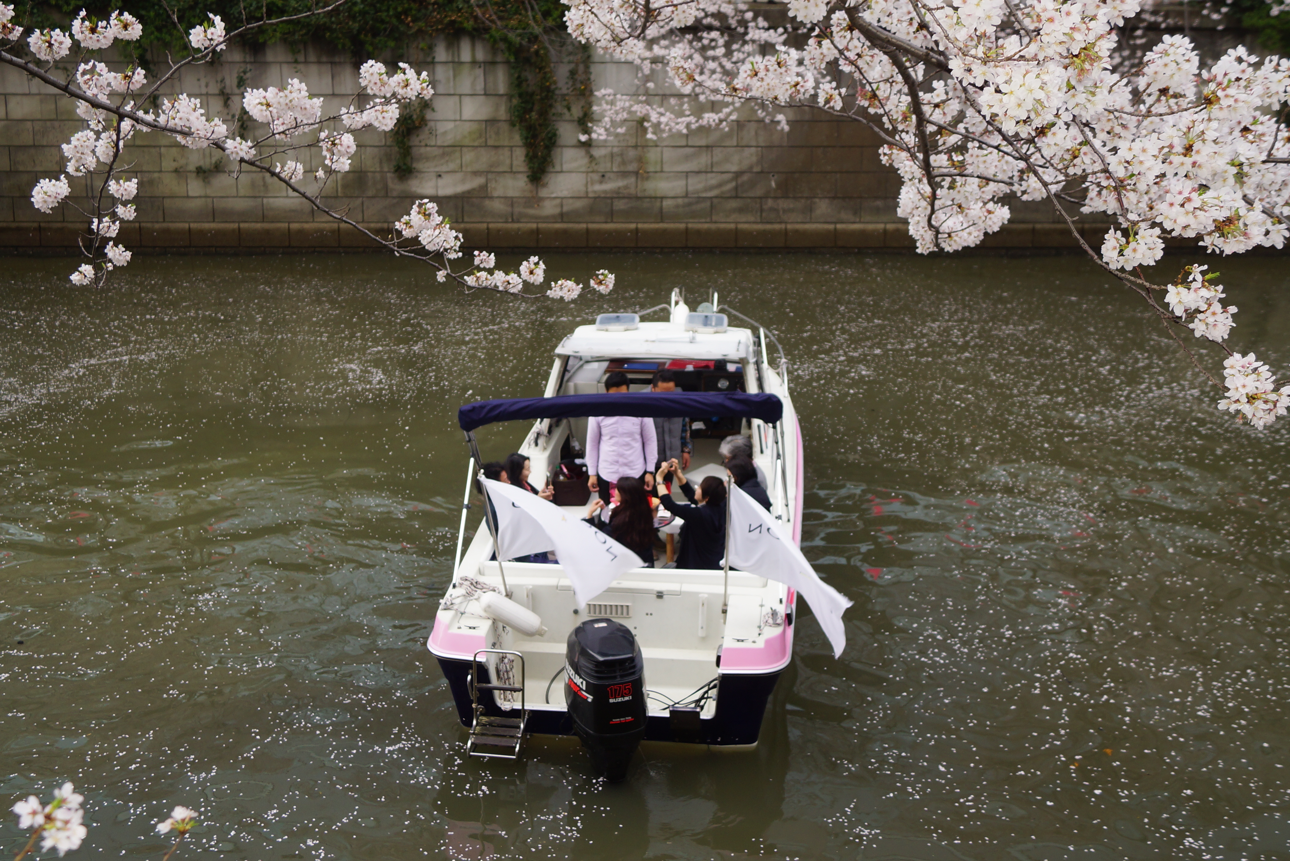 横浜港・大岡川でお花見をしながらクルージングを楽しむ様子