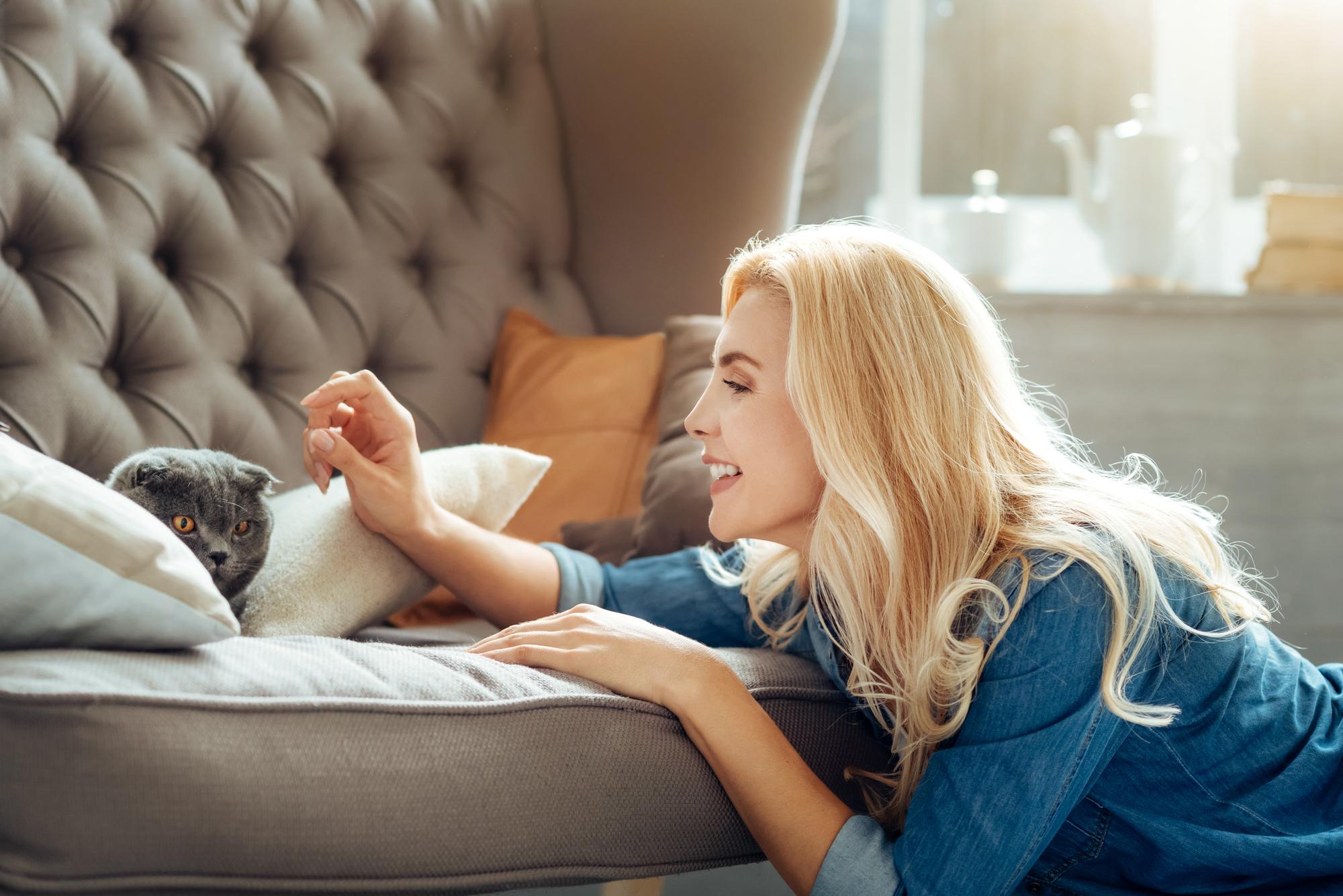 ソファでくつろぐ猫と女性