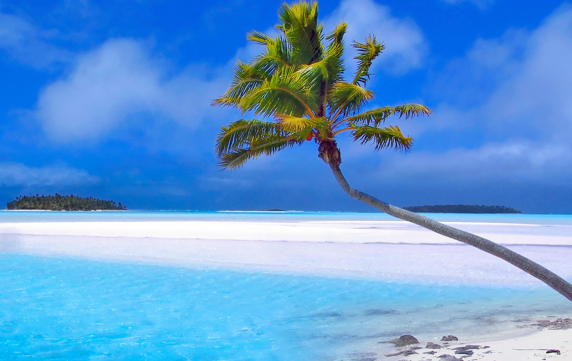 青い海とヤシの木