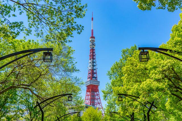 木の間から見える東京タワー