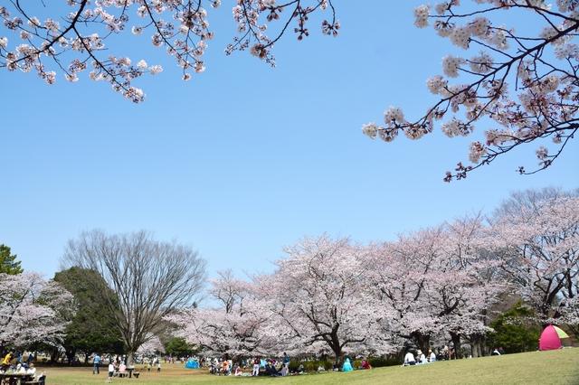 東京都内の桜の名所