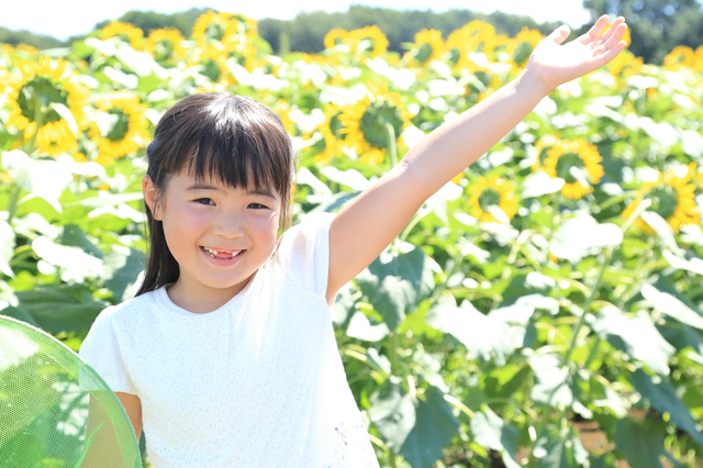 ひまわり畑でポーズをとる女の子